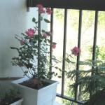 My balcony8